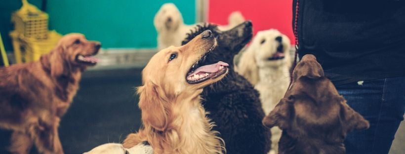National Dog Training Month: The Four Basic Commands You Need to Know