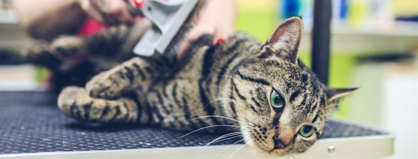 How Often Should I Groom My Cat?