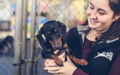 How to Prepare for Pet Adoption