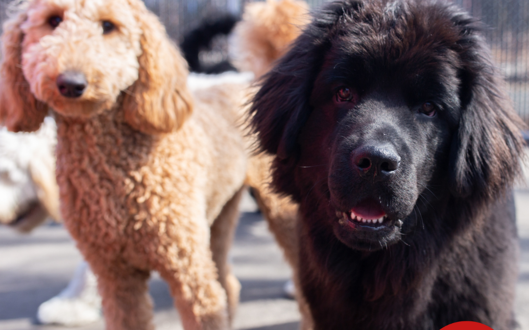 Should You Board Your Pets This Summer?